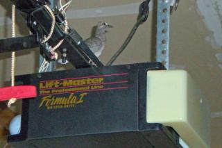 Garage-bird